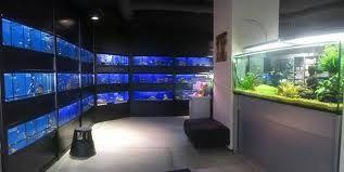 Acuacol tiendas de peces for Acuarios de peces ornamentales