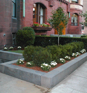 Mantencion de plantas de interior y jardines plantas - Plantas para jardineras al sol ...