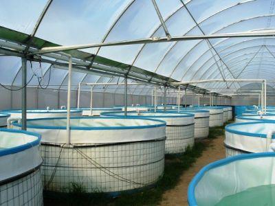 Alevinos del valle org agroacuicola biofloc bio for Estanques para piscicultura