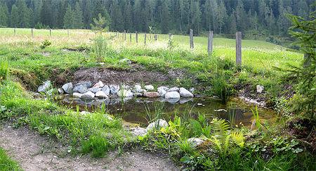 Ein naturgarten in tirol gartenteich ii erstes jahr for Larven im teich