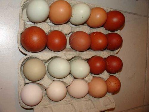 Hühnerrassen Eierfarbe