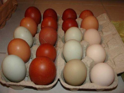 Hühnereier Farbe