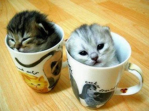 ganz süße katzen