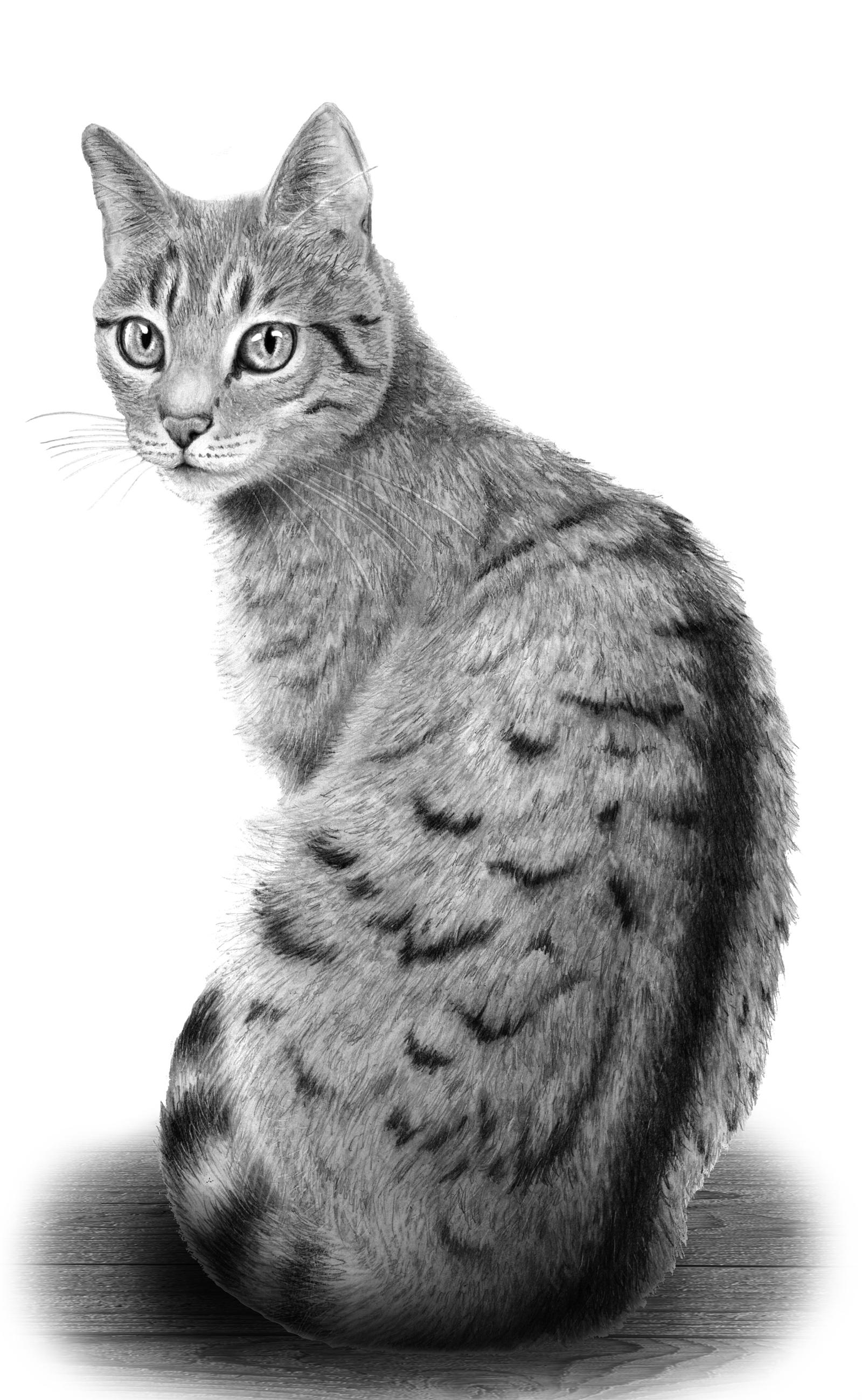 Cat S Galerie
