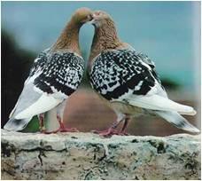aquila glossaire eloigner les pigeons des villes. Black Bedroom Furniture Sets. Home Design Ideas
