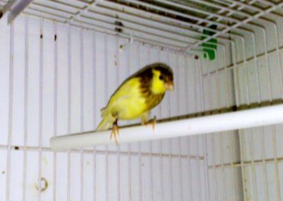 http://www.aviariofernandoromero.es.tl/