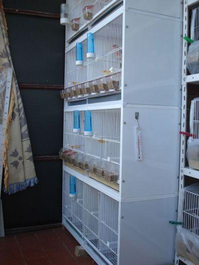 Aviariovallecas mi aviario - Modulos de canarios ...