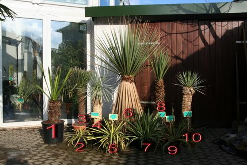 bananenzentrum karlsruhe yucca und co. Black Bedroom Furniture Sets. Home Design Ideas