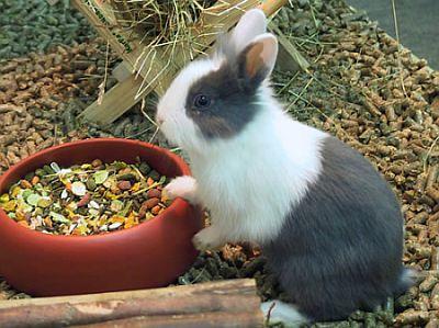 tierparadies hasen kaninchen. Black Bedroom Furniture Sets. Home Design Ideas