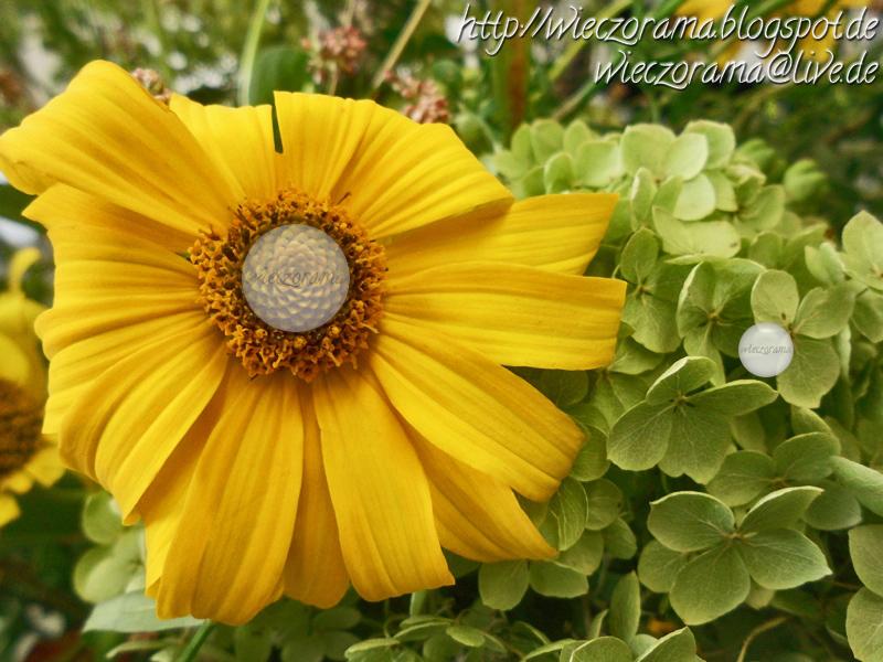 Die Nahaufname zeigt einen Gartenblumenstrauss