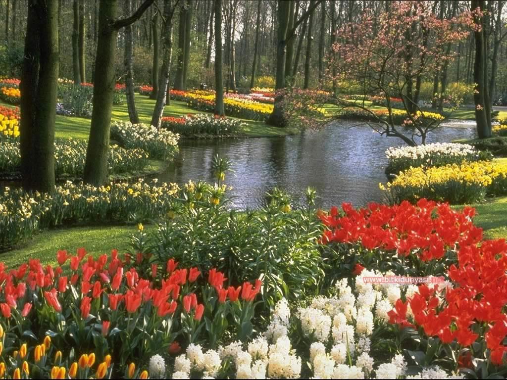 Blog cenneti tr gg çiçek bahçesi blog cenneti tr gg