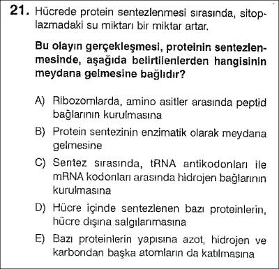 Protein sentezi ve hücre bölünmeleri test 3