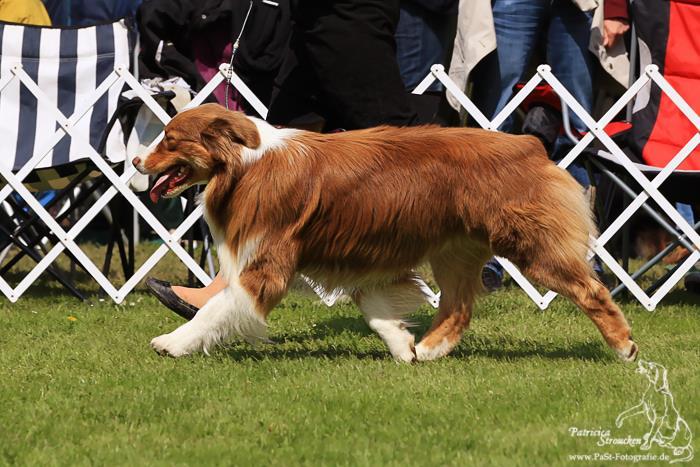 Dog Shows In Eindhoven