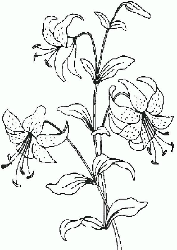 Цветочек распечатать раскраску