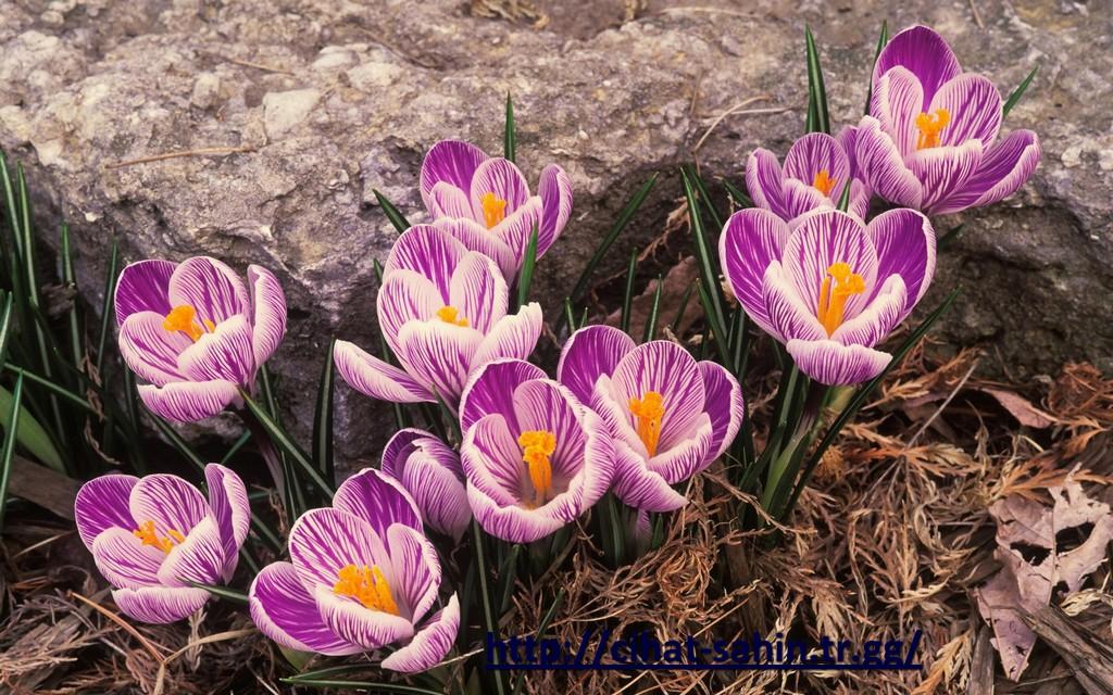 Картинки на рабочий цветы 3