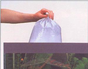 تــربيـــة الأسـمـــاك Bag1---24