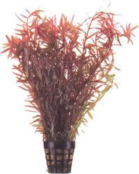 تــربيـــة الأسـمـــاك Plant1---16