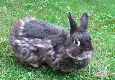 crazy about nins kaninchen wir und anderes getier unterbringung. Black Bedroom Furniture Sets. Home Design Ideas