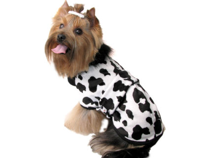 vestiti per cani abbigliamento per cani : DeCanis-Abbigliamento per cani - Capotti