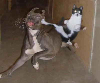 Fry vs jazz [Por 300] Perros-gatos