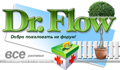 Dr.Flow