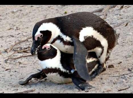 animal homosexuality