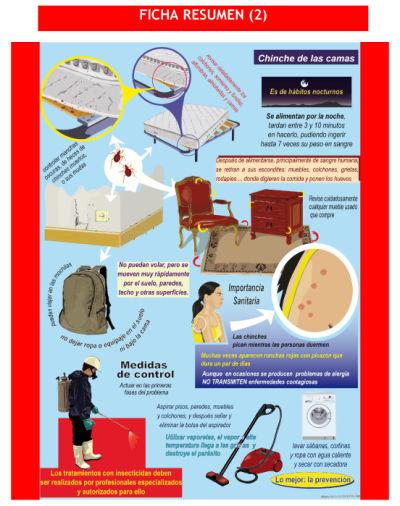 Benidorm sin plagas benidorm pest control and wildlife for Como eliminar chinches de cama naturalmente