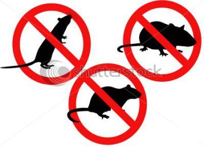 Benidorm sin plagas benidorm pest control and wildlife - Cepos para ratas ...
