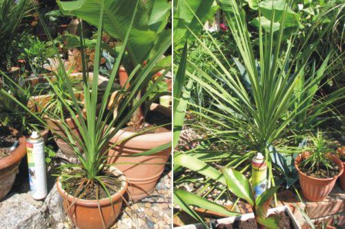 Exoten Garten Sukkulente, Xerophyten& Caudexpflanzen ~ 01163053_Unterschied Sukkulente Xerophyten
