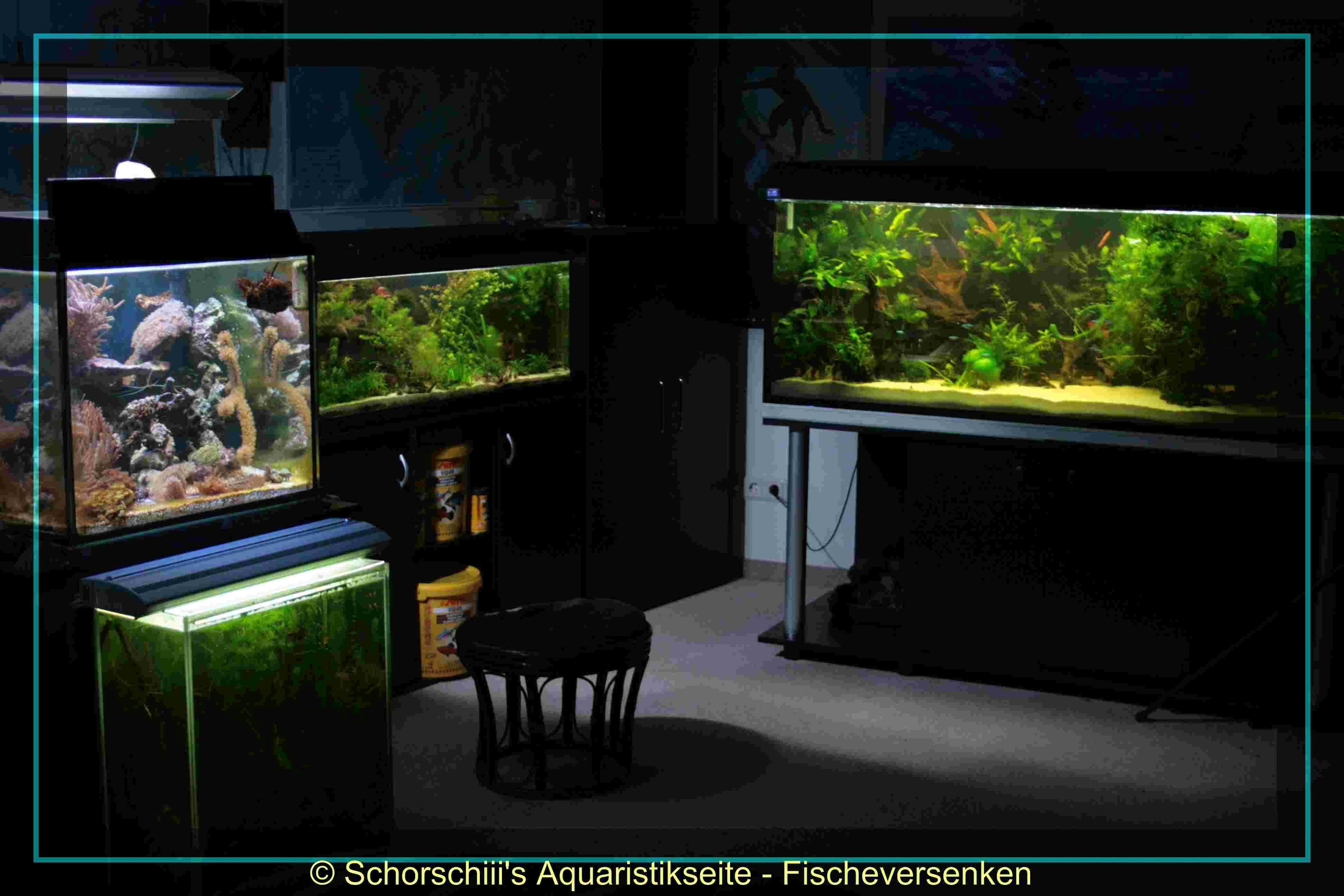 Aquarien for Zierfische hannover