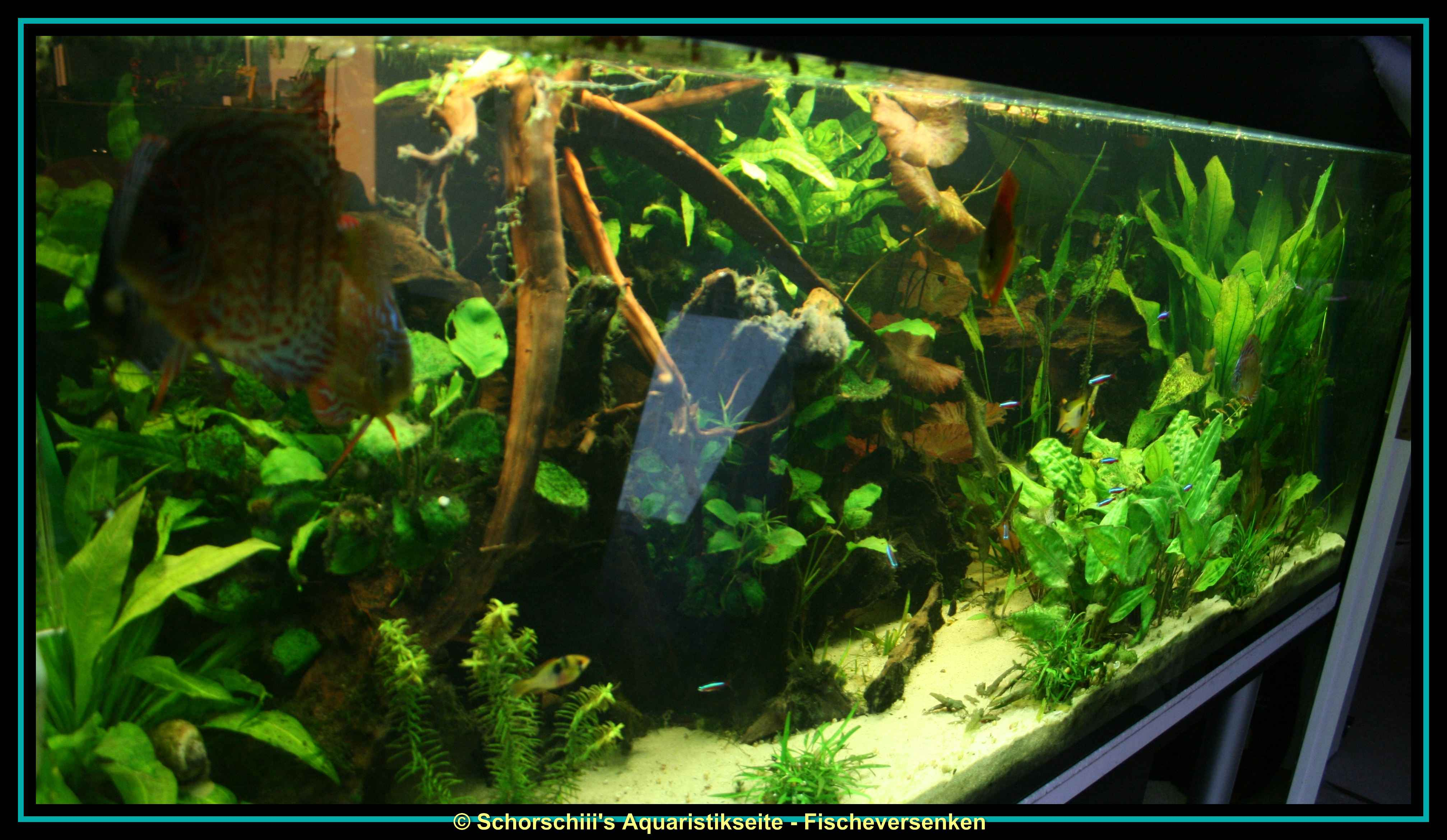 576l diskus aquarium for Diskus aquarium