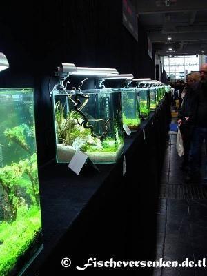 Heimtiermesse hannover 2009 teil 1 for Zierfische hannover