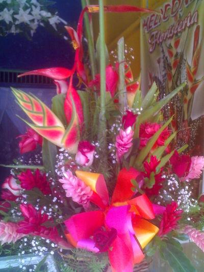 Publicidad for Vivero plantas tropicales
