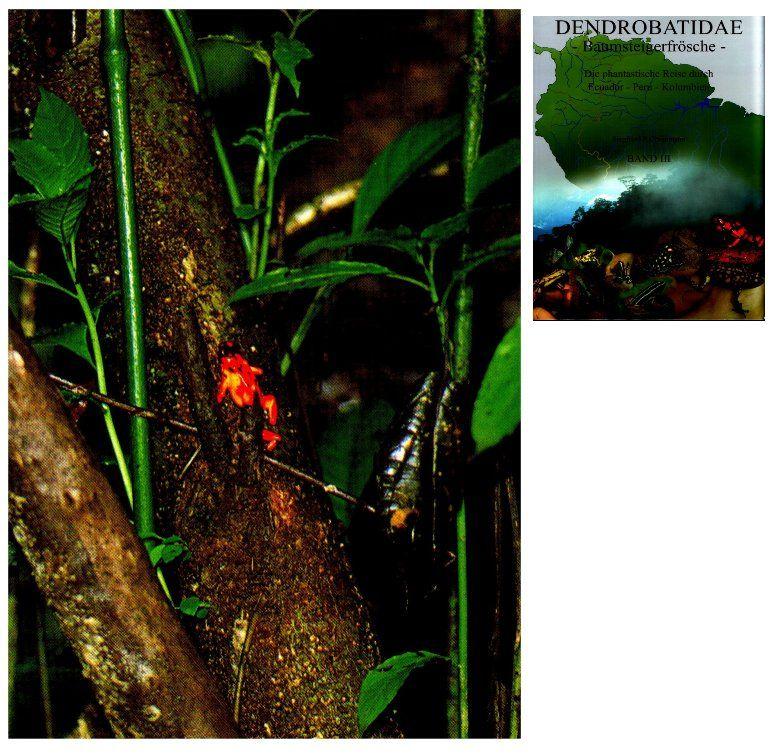 froschmichl 79211 denzlingen oophaga silvatica