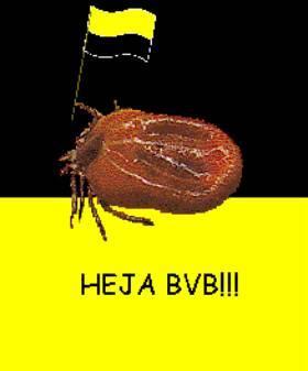 Zecken Bvb