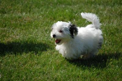 Filou auf dem Hundeplatz