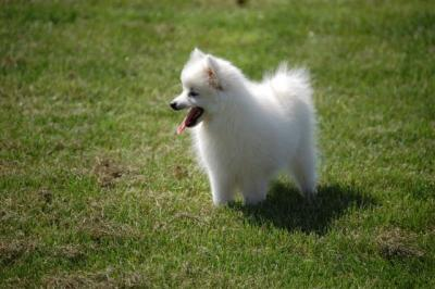 Kira auf dem Hundeplatz