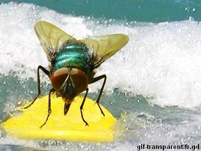 mouche qui fait du surf
