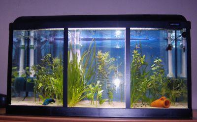 willkommen bei meine aquarien. Black Bedroom Furniture Sets. Home Design Ideas