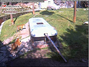 Kolmårdens Tigercam