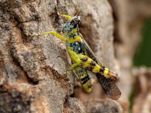 Nach oben upward gt zur seite insekten insect page