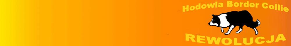 Hodowla Border Collie - Rewolucja