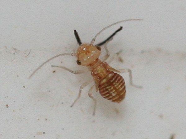 insektenwelt in der rh n und umgebung sonstige insekten 44. Black Bedroom Furniture Sets. Home Design Ideas
