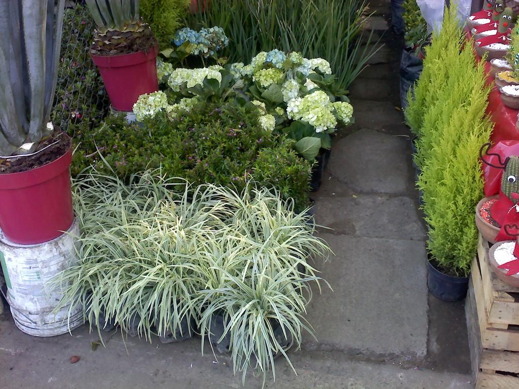 Jardineria la encantada jardineria - Plantas de sombra exterior ...