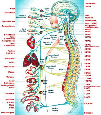 osteopathie bei spinalkanalstenose