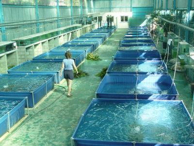 Jovenesrurales2010 piscicultura Estanques para cachamas