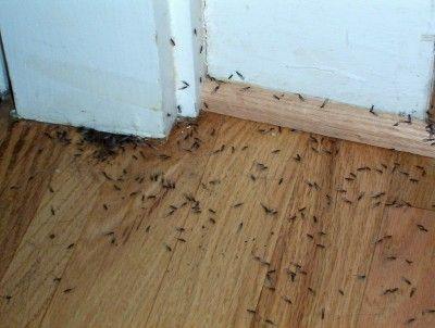 Killerfumigaciones Las Termites