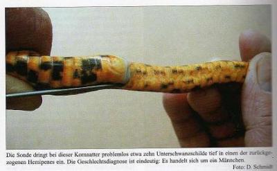 Bildquelle: Kornnattern und Erdnattern von Dieter Schmidt