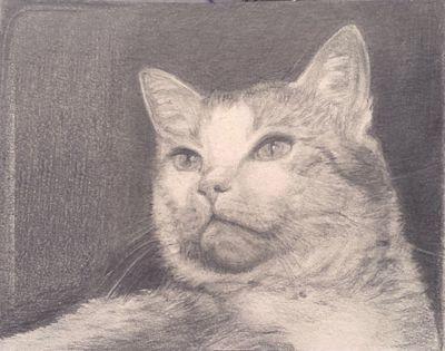 Portrait einer Katze, gemalt mit Bleistift von Elisabeth Becker-Schmollmann, gemalte Bilder, figürlich
