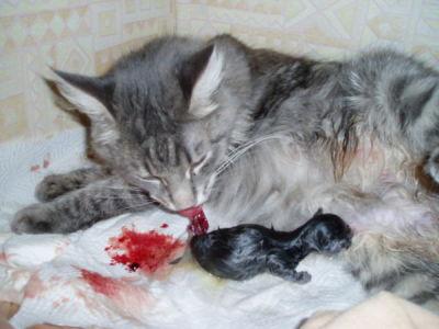 durchfall bei katzen was hilft